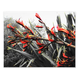 """""""Île de Waiheke"""" - le lin fleurit l'ART Photo D'art"""
