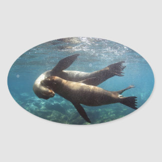 Îles de Galapagos espiègles d'otaries Sticker Ovale