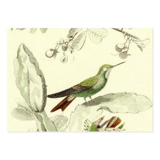 Illustration vintage de colibri - oiseaux 1800's carte de visite grand format