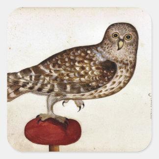 Illustration vintage de hibou sticker carré