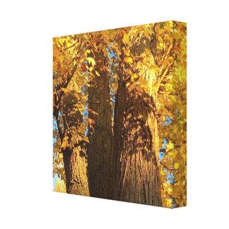 Im Glühen des goldenen Ahorn-Blätter - Leinwanddruck