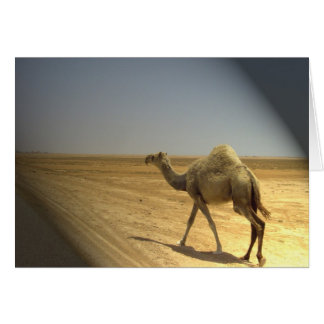 Im Scheinwerfer - Kamele in der Wüste Karte