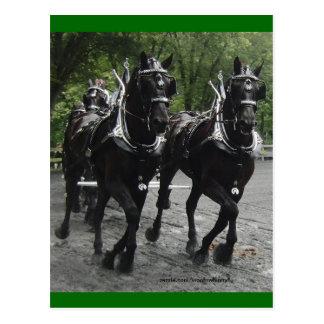 Im Schritt -- Entwurfs-Pferde Postkarte