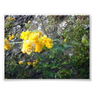 image d belles fleurs photo sur toile