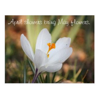 IMG_0371, douches d'avril apportent des fleurs de Carte Postale