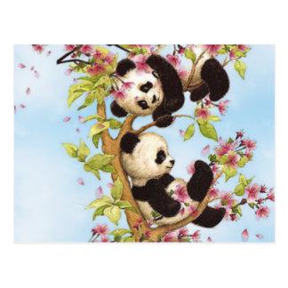 IMG_7386.PNG niedlich und bunter Panda entworfen Postkarte