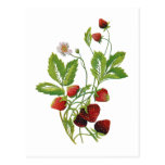 Imitat stickte frische Erdbeeren Postkarte