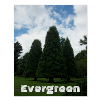Immergrüne Baum-inspirierend Plakat