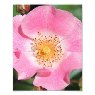 Impression florale rose - fleur photos