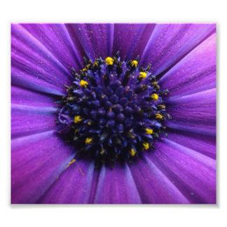 Impression Photo Beau centre de fleur pourpre