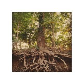 Impression Sur Bois Beaux arbre et racines