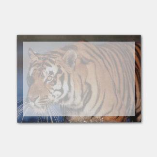 Indien, bengalischer Tiger (Panthera der Tigris) 2 Post-it Klebezettel