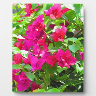 Indien-Reise-Blumen-Bouganvilla-Blumenemblem Fotoplatte