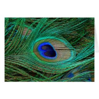 Indische blaue Pfau-Feder Grußkarte