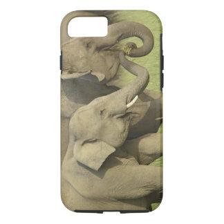 Indischer/asiatischer Elefant, der für Nahrung iPhone 8/7 Hülle