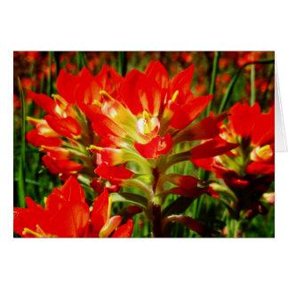 Indischer Malerpinsel-roter Texas-Wildblume-freier Karte