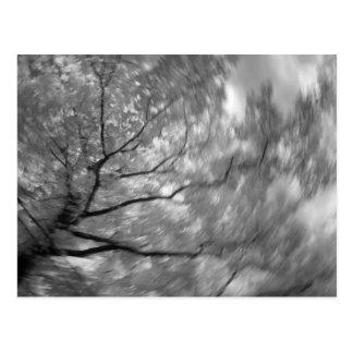Infrarotbaum Postkarte