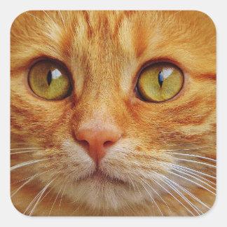 Ingwer-Katzen-Quadrat-Aufkleber - glatt Quadratischer Aufkleber