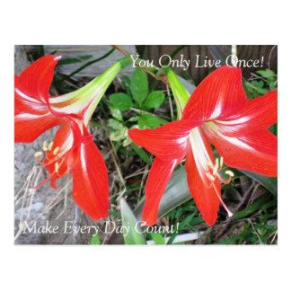 Inspirational rote Lilien-Blume: Postkarte