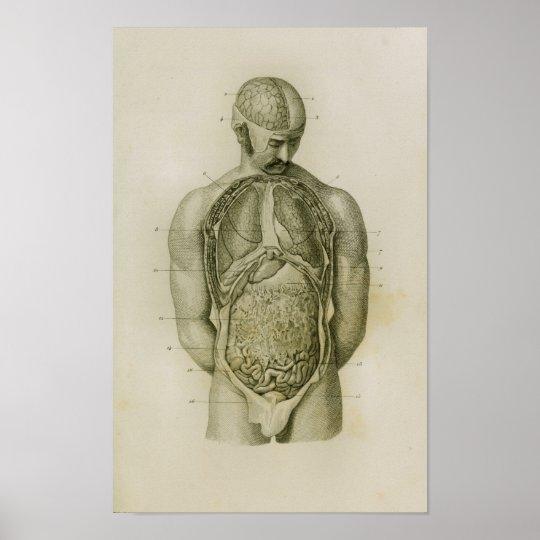 Interne Organ-Lunge-Gehirn-Vintager Anatomie-Druck Poster   Zazzle.ch