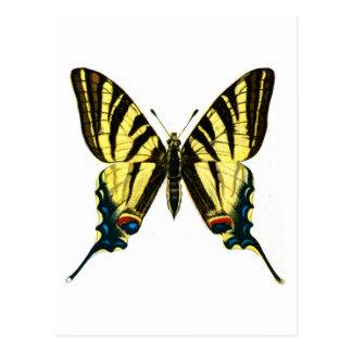 Iphiclides podalirius postkarte