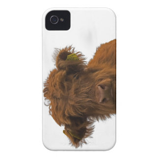 iPhone Baby Highland Cow Case iPhone 4 Cover