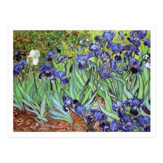 Iris durch Vincent van Gogh Postkarte