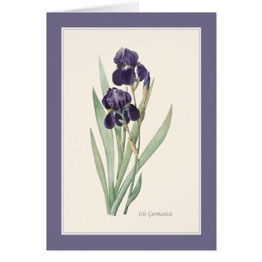 Iris Germanica botanische Anmerkung Mitteilungskarte