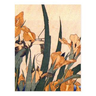 Iris japonais vintage cartes postales