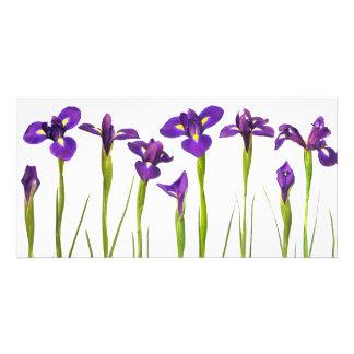 Iris pourpres - modèle customisé par fleur d'iris modèle pour photocarte