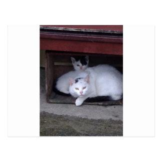 Irische Katzen nehmen ShelterOn ein regnerischen Postkarte
