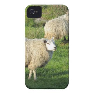 Irische Schafe iPhone 4 Cover