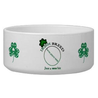 Irische Zucht-gerade ein kleines Stückchen Napf