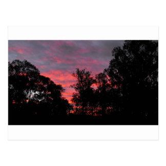 Ironbark Sonnenuntergang Postkarte
