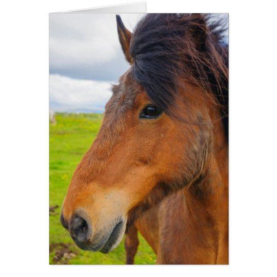 Island. Eyrarbakki. Isländisches Pferd Karte