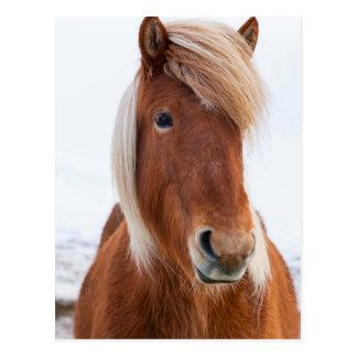 Isländisches Pferd während Winters 2 Postkarte