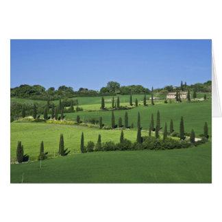Italien, Toskana, Multepulciano. Zypresse-Bäume Karte