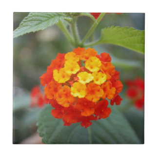 Italienische Blumen Kleine Quadratische Fliese