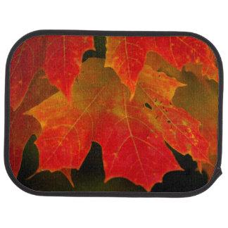 Itasca Staats-Park, Herbstfarben 2 Autofußmatte