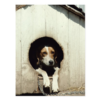 Jagdhund im Hundehaus Postkarte