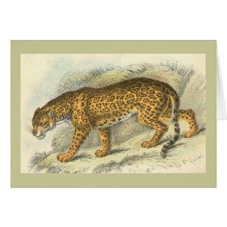 Jaguar, Felis onca Karte