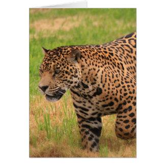 Jaguar-Gruß-Karte Karte
