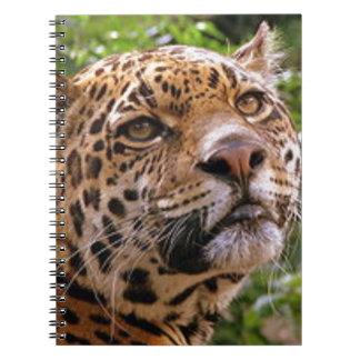 Jaguar neugierig spiral notizblock