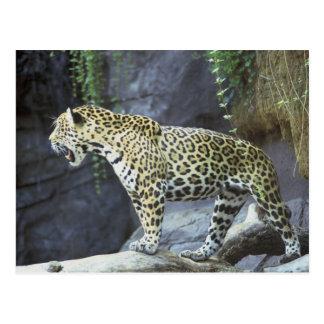 Jaguar Postkarte