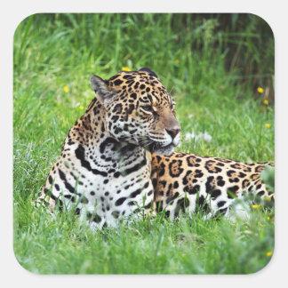 Jaguar Quadratischer Aufkleber