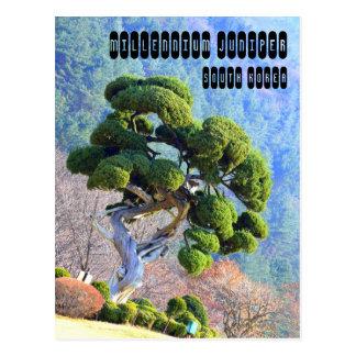 Jahrtausend-Wacholderbusch Postkarte