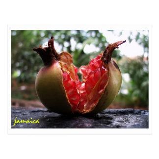 Jamaika-Granatapfel Postkarte