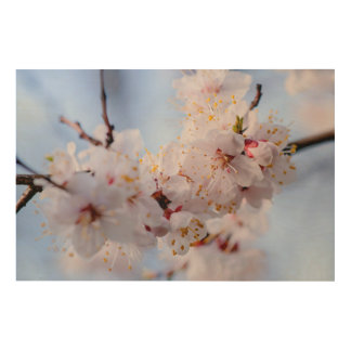 Japanische Aprikosen-Blüte Holzdruck