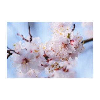 Japanische Aprikosen-Blüte Leinwanddruck