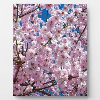 Japanische KirscheBlume Fotoplatte
